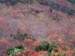 淡い紅葉の濃淡が美しい
