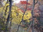 南会津の紅葉