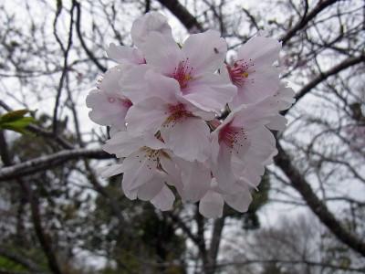 Itooyama03