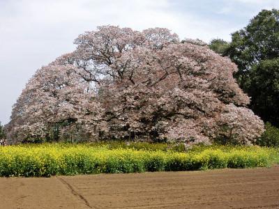 Yoshitaka04