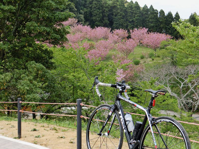 Akimoto03