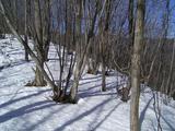 日だまりと雪の尾根道