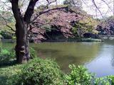葉桜にも風情が…