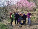 梅は満開、岳樺クラブも満開