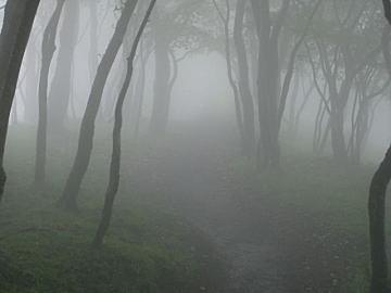 霧の鍋割山稜(Photo by Kuni)