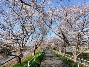 Sakura01s