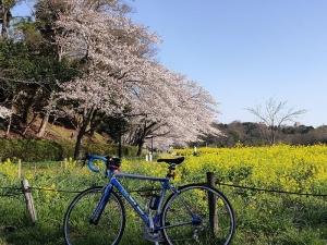 Sakura02s