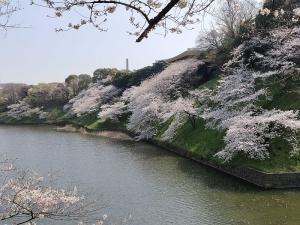 Sakura04s