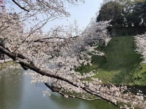Sakura07s